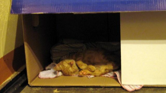 Playas del coco actualit s - Mon chat fait pipi dans mon lit ...
